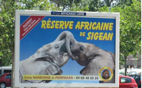 Et si la réserve africaine de Sigean déménageait à Millau ?   Journal de Millau   L'info tourisme en Aveyron   Scoop.it