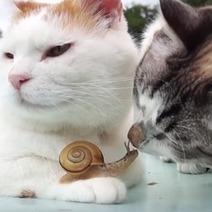 Que se passe-t-il quand un chat a un coup de foudre pour un escargot ? - Insolite - Wamiz | CaniCatNews-actualité | Scoop.it