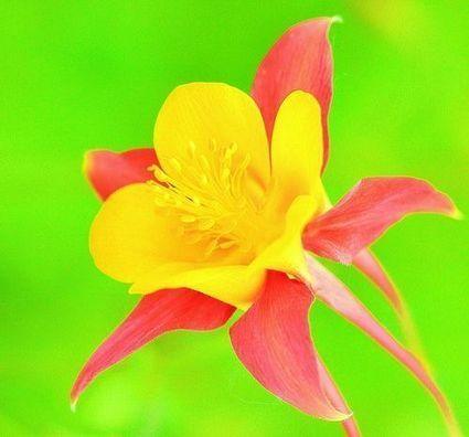 Terapia con Flores de Bach | Flores de Bach | Scoop.it