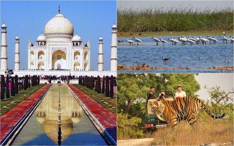 Royal Tiger Safari Tour with Taj Mahal Travel   Taj Mahal Travel   Scoop.it