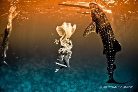 Extraordinary fashion shoot involves whale sharks, world's largest fish   BORNEO SHARKARMA   Scoop.it