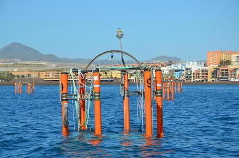 Nueve laboratorios flotantes para investigar la acidificación del agua - La Razón | Infraestructura Sostenible | Scoop.it