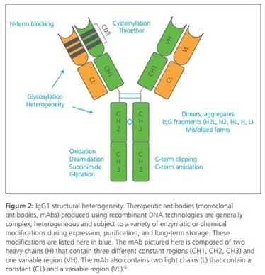 The Future of Biologics Drug Development is Today | Immunology and Biotherapies | Scoop.it