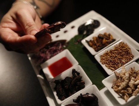 Marseille : les insectes, on en fait tout un plat | Entomophagy: Edible Insects and the Future of Food | Scoop.it