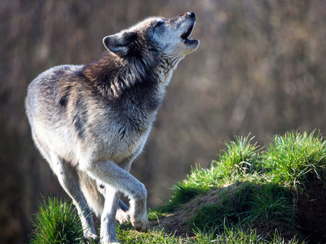 America Says Yes, Congress Says No to Protecting Endangered Species | Introduce new course in schools called COMPASSION | Scoop.it