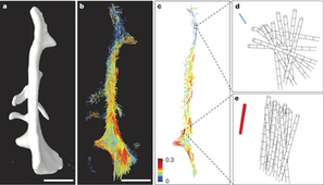 Nanostructure surveys of bone by small-angle scattering tensor tomography | Amazing Science | Scoop.it
