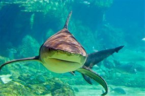 Marshall Islands and Palau commit to shark protection   Marshall Islands   Scoop.it