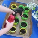Planting for mother's day | Teach Preschool | Scoop.it