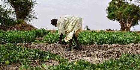 18/11/16 - «Climat: l'agriculture fait partie de la solution» | INRA Montpellier | Scoop.it