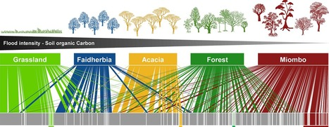 Arbuscular mycorrhizal fungi communities from tropical Africa reveal strong ecological structure   MycorWeb Plant-Microbe Interactions   Scoop.it