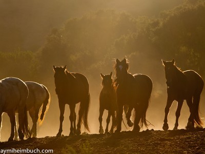 Vanishing Mustangs : America's Wild Horses In Danger of Disappearing: US Government Mismanagement And Slaughter | Biodiversity IS Life  – #Conservation #Ecosystems #Wildlife #Rivers #Forests #Environment | Scoop.it