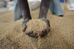 Food Production Affected as African Farmers Put Hope in Beer | Diaspora investments | Scoop.it