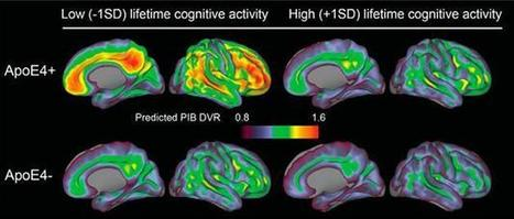 A Life of Cognitive Enrichment May Fend Off Dementia. But How? | ALZFORUM | Gifted Education | Scoop.it