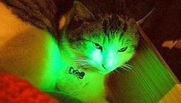 Gatos transgénicos y fluorescentes ayudarán a combatir el sida | Alimentos y Tecnología | Scoop.it