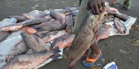 La pêche illégale, fléau du golfe de Guinée | CAPLP lettres histoire : ressources pour les questions au concours | Scoop.it