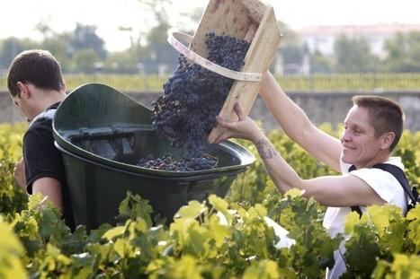 Vers une réduction des pesticides dans le vignoble de Bordeaux | Le vin quotidien | Scoop.it