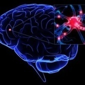 How exactly do neurons pass signals through your nervous system? | Free Open Comunity | Scoop.it