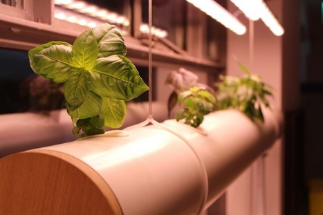 Alimentation: cultivons nos vi(ll)es! - The Dissident | potager urbain | Scoop.it