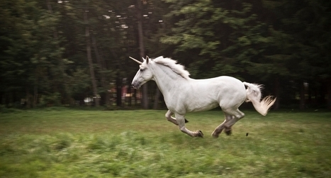 Looking for an IT manager? Don't go chasing unicorns | memeburn | Information Systems Manager | Scoop.it