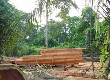 Cameroun: un programme de 13,7 milliards de FCfa pour développer l'industrie du bois - Agence Ecofin | Actu de l'industrie | Scoop.it