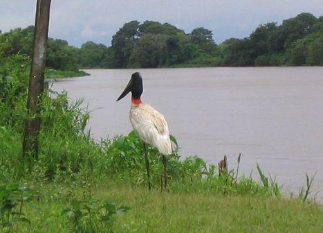 Conoce el Pantanal, el humedal más grande del mundo   Uso adecuado de la tecnología. No es tan difícil.   Scoop.it