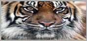 Wildlife Tour Packages in India | Tour Agency in Delhi | Scoop.it