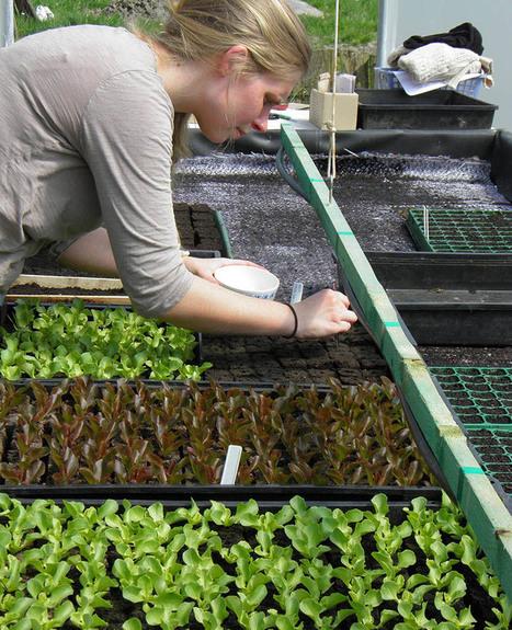 Catherine, la paysanne «rebelle» qui vend ses semences illégales | Économie circulaire locale et résiliente pour nourrir la ville | Scoop.it