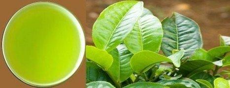 Organic Tea Etc MD | Organic Tea Etc | Scoop.it
