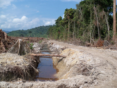 Oil palm plantations threaten water quality, Stanford scientists say | Agua | Scoop.it