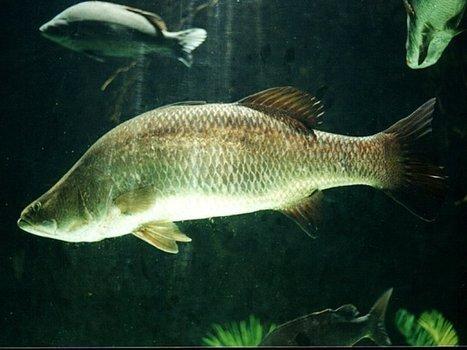Fish News EU | Global Aquaculture News & Events | Scoop.it