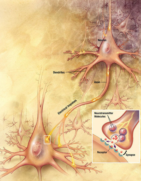 Understanding Our Bodies: Serotonin, The Connection Between Food and Mood | Prevention of Stress & Burnout as an Economic Factor | Scoop.it