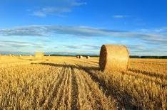 Les éleveurs français percevront des aides de la politique agricole commune de manière anticipée. | agro-media.fr | Actualité de l'Industrie Agroalimentaire | agro-media.fr | Scoop.it