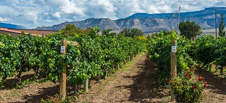 Colorado Wineries CO | Business | Scoop.it