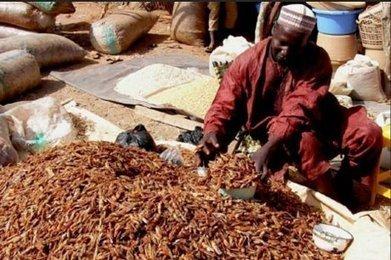 Insectes comestibles : les recommandations des Nations unies | Agriculture en Dordogne | Scoop.it