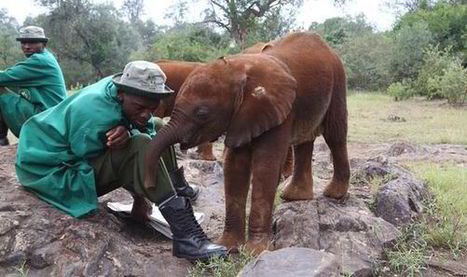 Orphaned baby elephant rescued after revenge attack | GarryRogers NatCon News | Scoop.it