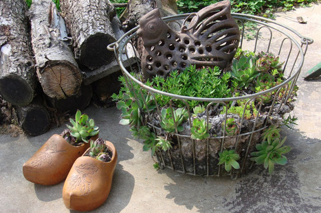 Vintage egg basket of succulents | Upcycled Garden Style | Scoop.it