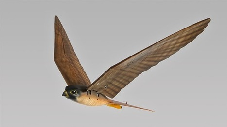 Robotic raptors look and fly like the real thing | Natural Resource Management | Scoop.it