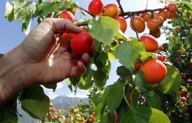 La guida al km zero a Milano e provincia   myfruit - km0 e consegne a domicilio di frutta e verdura   Scoop.it