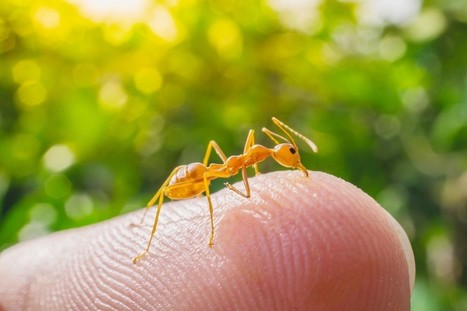 Urgent Care Federal Way Camping Tips: Treating Bug Bites Naturally | USHealthWorks.com Federal Way Center | Scoop.it