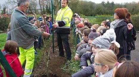 Les élèves ont assisté à la plantation d'arbres dans leur jardin | L'école Cousteau dans la presse et sur internet... | Scoop.it