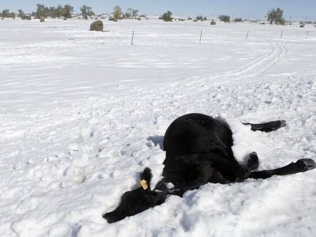 All Hate, No Cattle: Red State Devastated by Climate Extremes | Sustain Our Earth | Scoop.it