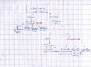 Cartes mentales sur les adaptations des êtres vivants selon les saisons   Lettres et Cartes Heuristiques   Scoop.it