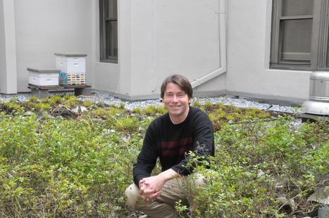 Green roofs could be the answer to clean D.C.'s rivers | GreenRoofs | Scoop.it