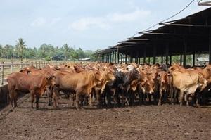 Live-ex welfare overhaul - National Rural News - Livestock - Cattle - Stock & Land | Animal Cruelty | Scoop.it