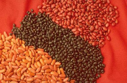 Des maisons de semences paysannes pour se libérer de l'agrobusiness, un mouvement mondial | L'Indi Gène | Scoop.it