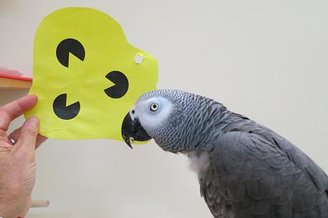 Parrots know shapes | De Natura Rerum | Scoop.it
