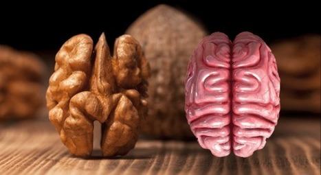 8 aliments qui soignent les organes auxquels ils ressemblent   Cette nature qui nous soigne   Scoop.it