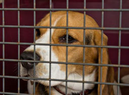 October is National Adopt-a-Shelter-Dog Month! | The Dogington Post | Up Country | Scoop.it