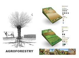 L'Agroforesterie en 10 questions - Association ... | agroecologie | Scoop.it