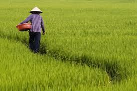 Vietnam worries about future supplies of water, food   Eco-Business.com   Water Stewardship   Scoop.it
